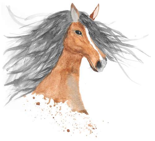 Odręczny rysunek akwarelami konia