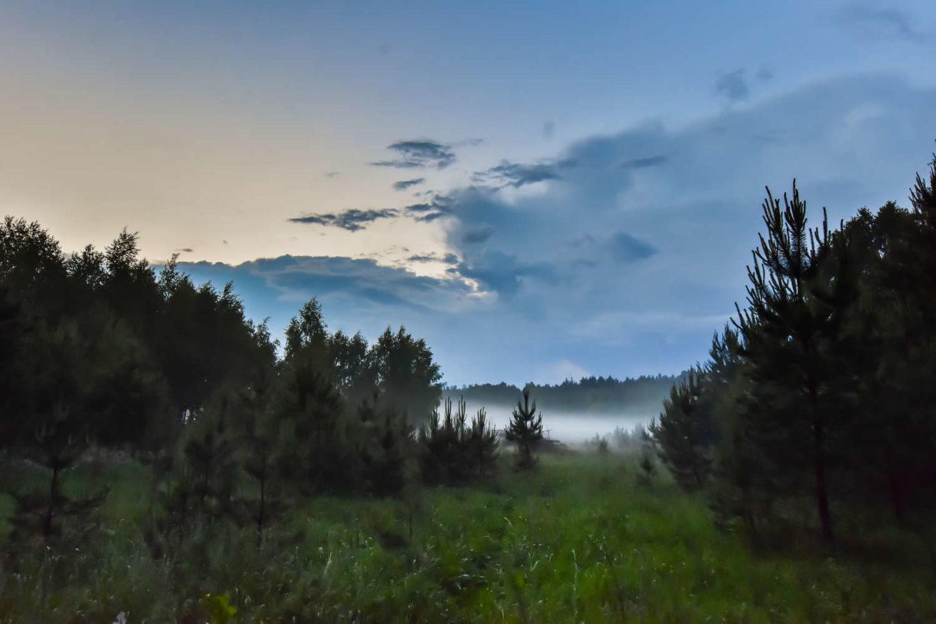 mazurski las przy kolonii