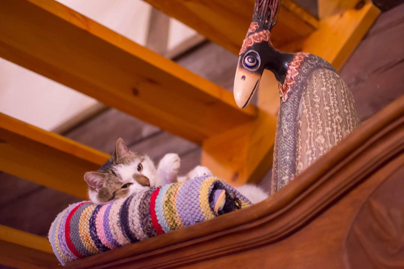 stałym mieszkańcem kolonii mazurskiej jest kot