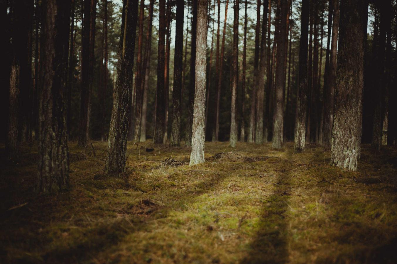 las agroturystyka w mierkach